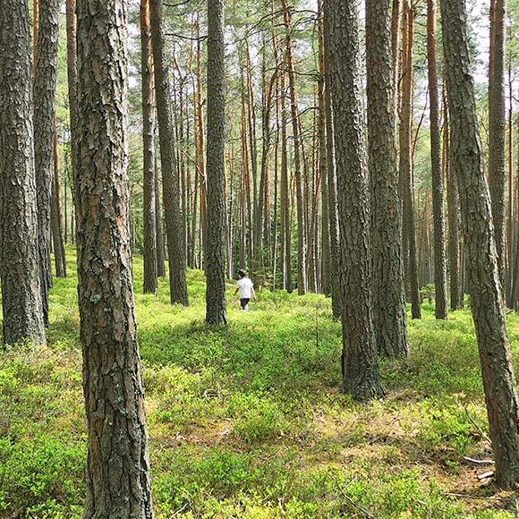 Hengstberger Motiv Wald Öko