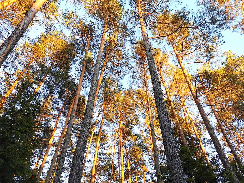 Waldmotiv